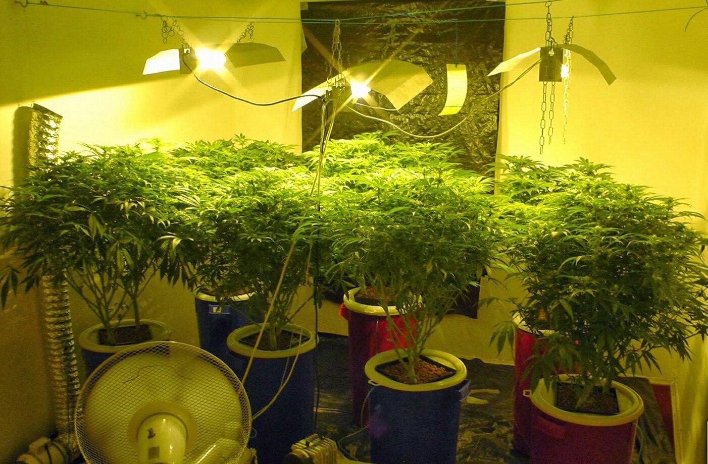Растим марихуану на гидропонике исследования на коноплю
